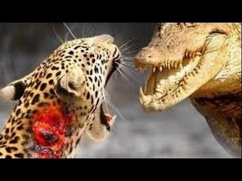 jaguar  croc.jpg
